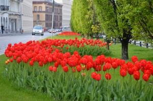 Poznański kwiecień w pełnej krasie