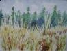 Cała złocistość traw